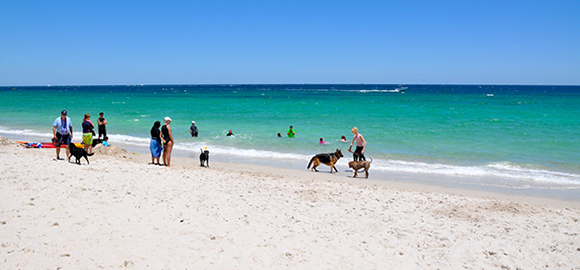 Adopting-a-Local---5-Tips-for-Expat-Dog-Owners-in-Australia