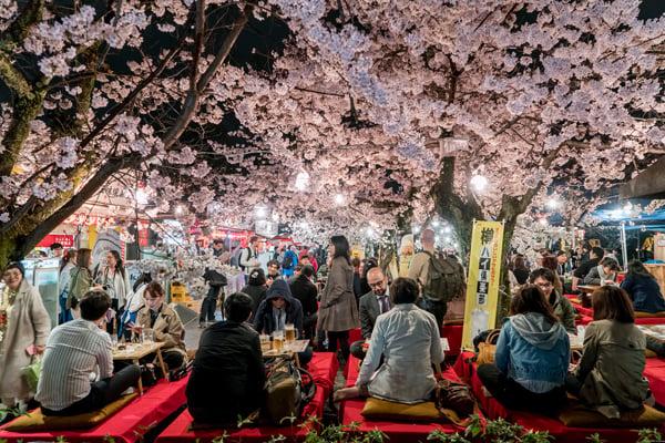 Hanami Festival in Kyoto, Japan