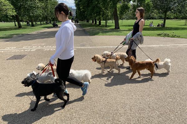 Dog Walkers in Kensington Gardens